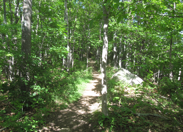 Trail to Owls Head Mountain