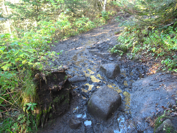 Muddy Trail on Cascade Mountain in the Adirondacks