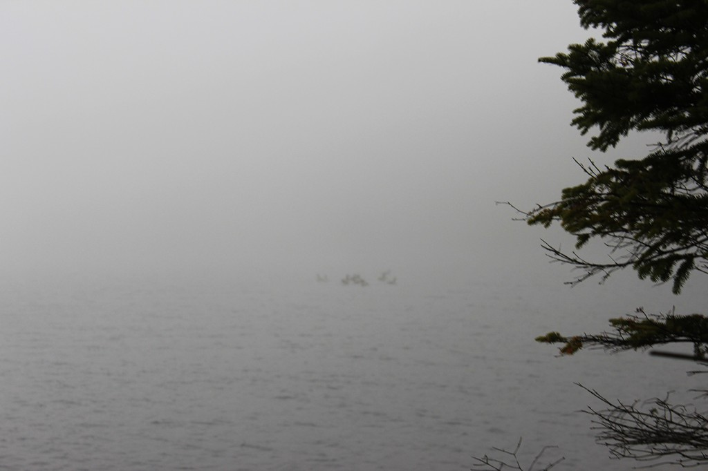 Fog-grounded geese in the Adirondacks