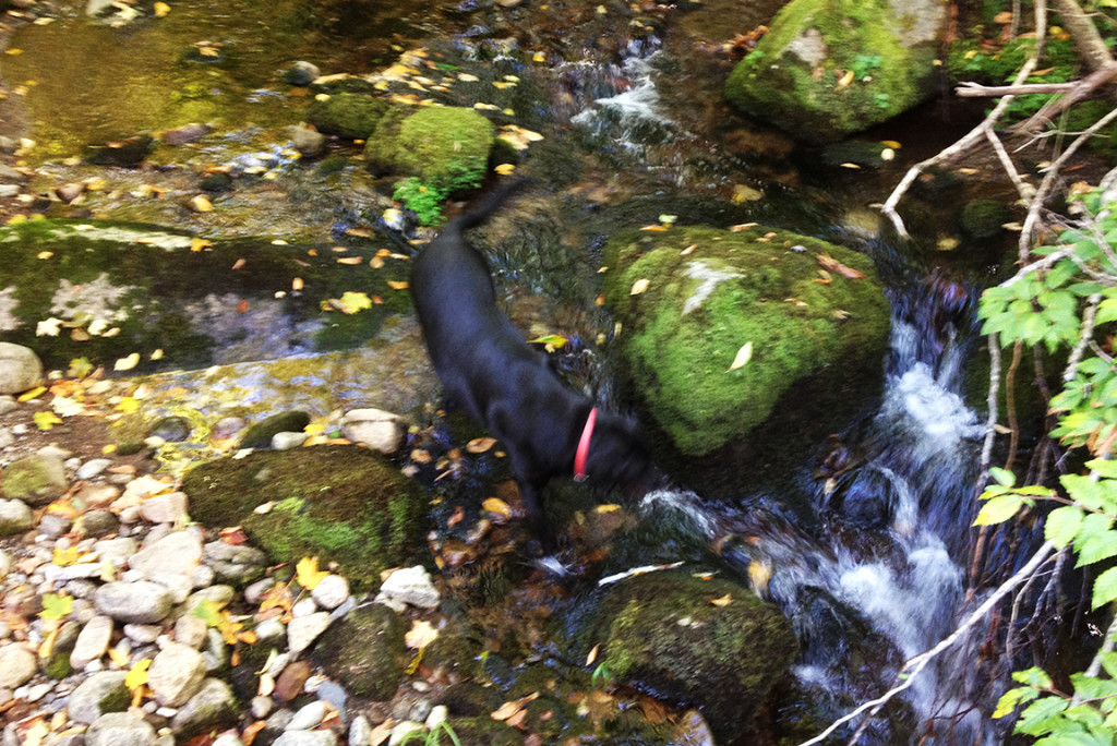 Adk lifestyle hound Ziggy cools off at MVH