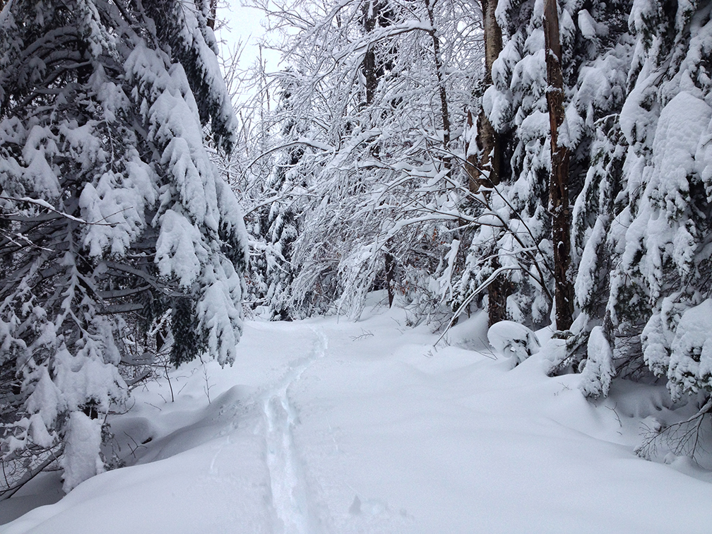 Adirondack backcountry skiing on the Jackrabbit Trail 2014