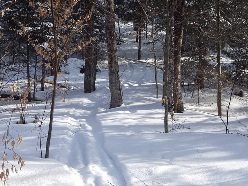 Adirondack backcountry tree skiing